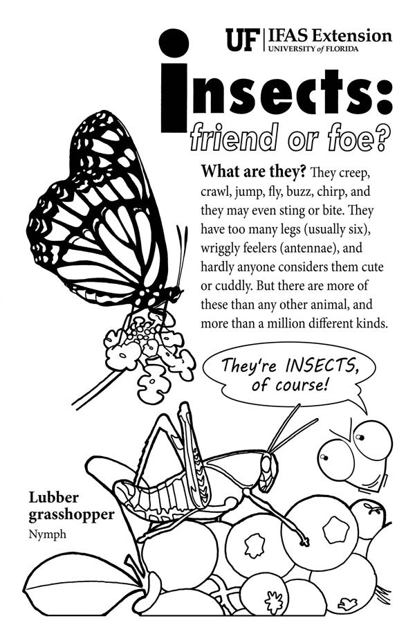 Insects: Friend or Foe?
