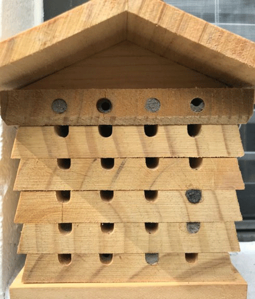Full view of a pollinator nesting box with cavities at various stages of Pachodynerus erynnis (Lepeletier) use