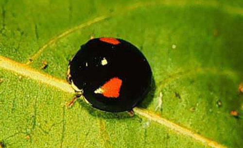 Name for study of insects