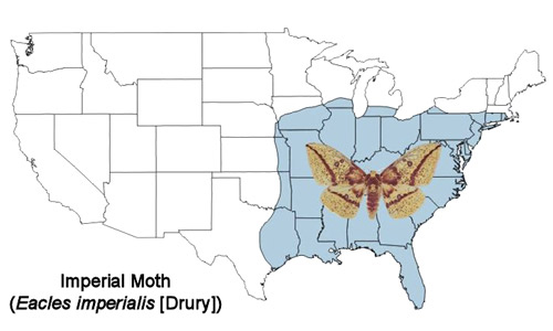 Imperial moth, Eacles imperialis (Drury), distribution map.