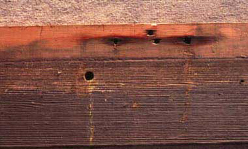 Entry Hole Drilled Into Structural Wood By A Large Carpenter Bee Xylocopa Sp