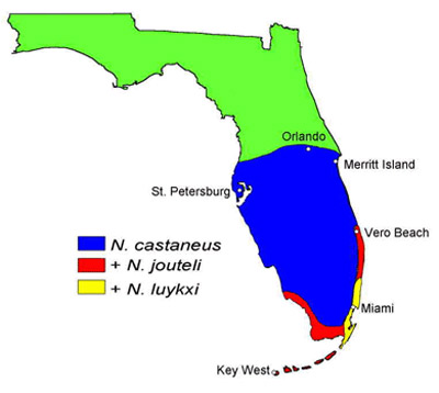 distribution of neotermes species in florida