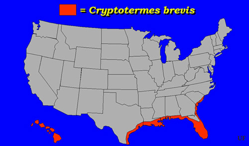 United States distribution of the West Indian drywood termite, Cryptotermes brevis (Walker).