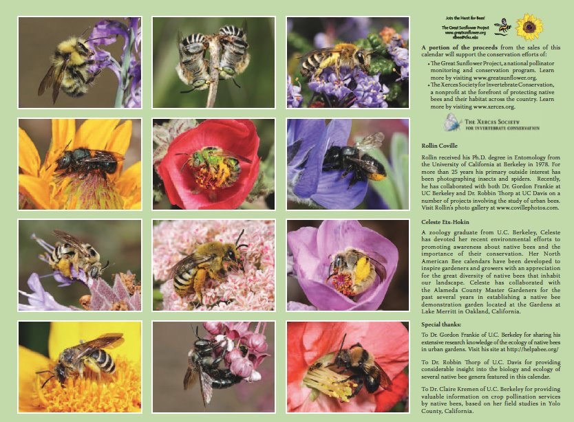 And Other Characteristics Of The Bee Friendly Plants You Include In Your Garden Along With Numbers Diffe Types Bees That Visit Them