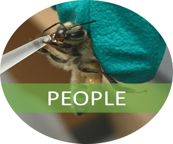 An image of a bee being hand fed with a banner indicating link to people page. Photo credit Suzy Rodriguez.