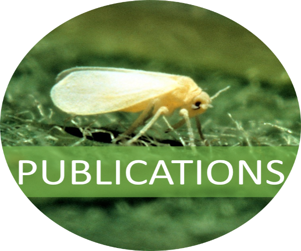 A sweet potato whitefly with a banner indicating that this image links to the publications page. Photo credit USDA.