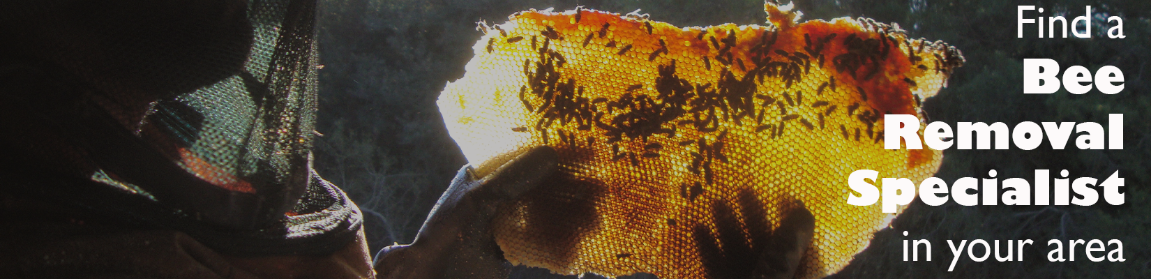 Bee Removal Banner
